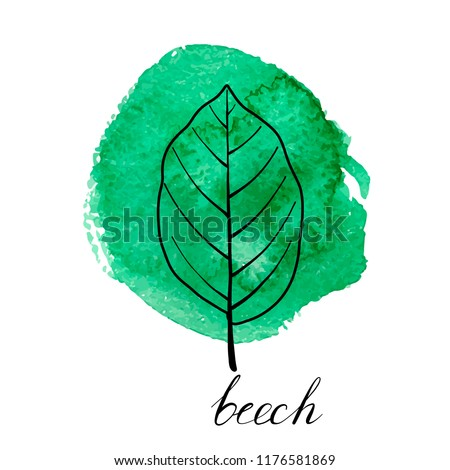 vector leaf of beech tree at