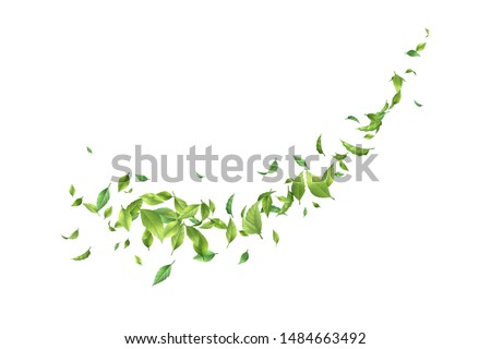 Vector leaf whirling in the wind. Green leaves in motion on a white background