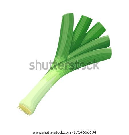 Vector leek vegetable illustration for farm market menu. Healthy food design Сток-фото ©