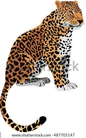 vector leopard panthera pardus