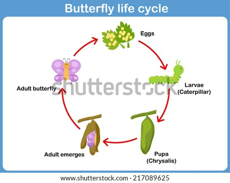 Life Cycle Illustration Download Free Vector Art Stock Graphics