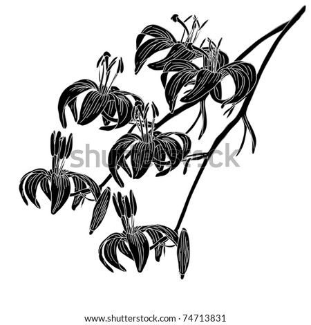 vector lily flower isolated on