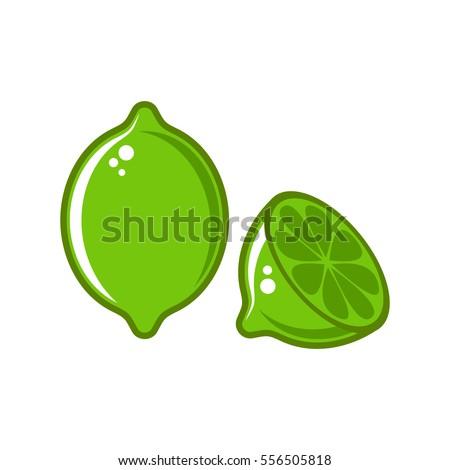 vector lime illustration
