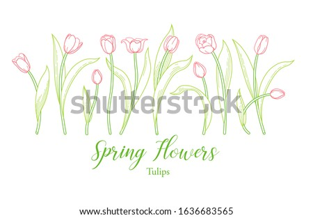 vector line art set of blooming