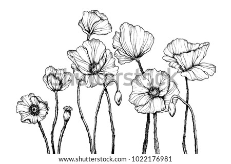 Vector line art with poppies. Black wall art. Monochrome floral background wallpaper. Flower ornament good for web, print and stencil. Сток-фото ©