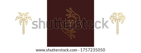 Vector line elegant decoration design elements set -palm trees and female gesture hands illustrations minimal linear style. Collection bohemian delicate outline graphics for logo emblems and branding