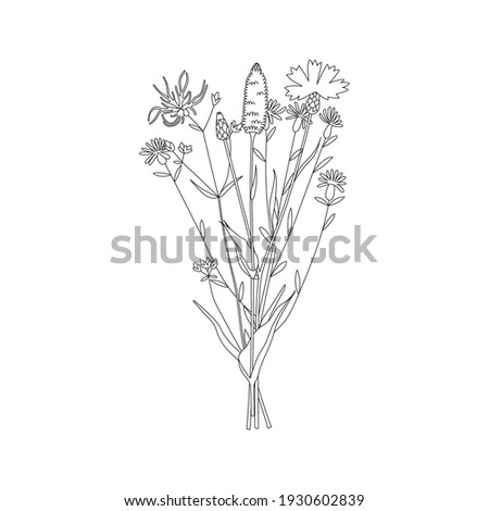 Vector line hand drawn illustration with a summer bouquet of wildflowers. Minimalist Flower, herb and medicinal plant. For logo design, tattoo, decor, postcard Photo stock ©