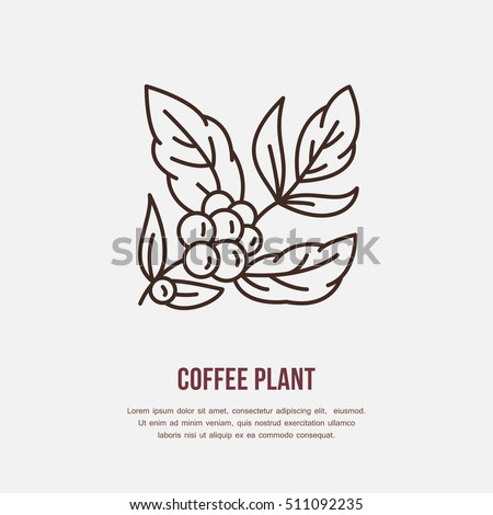 Vector line icon of coffee tree. Coffee plant linear logo. Outline symbol for cafe, bar, shop.