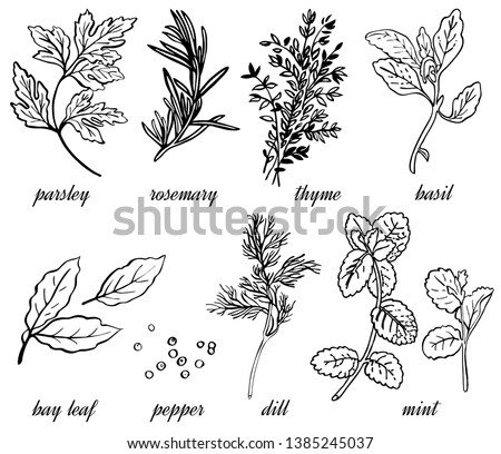 Vector linear set of spice herbs