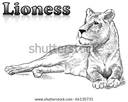 Lioness Tattoos Designs. Lioness+tattoo