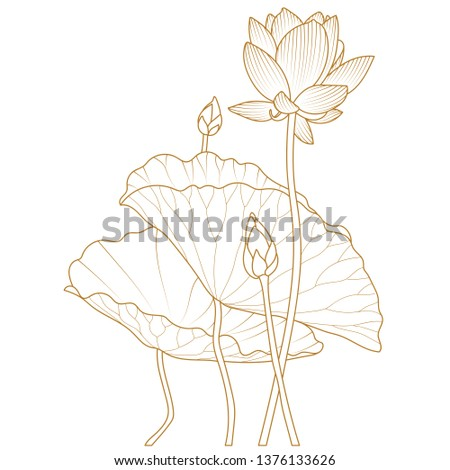 Vector lotus flower.Lotus seed pods. Isolated illustration element. Vector set of hand drawn lotus flowers and leaves. Sketch floral botany collection in graphic golden style