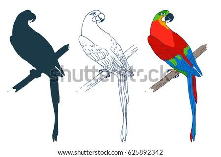 vector macaw parrot