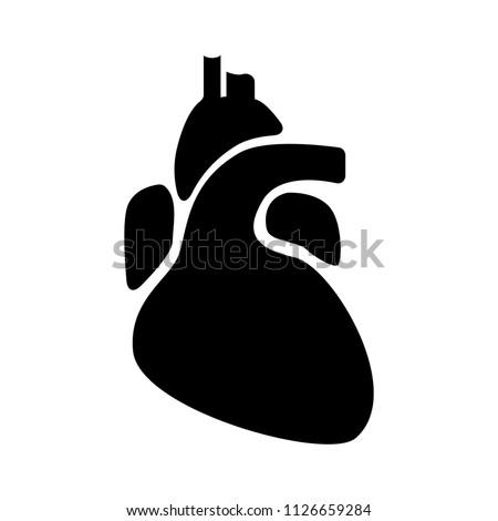 vector medical heart illustration symbol. organ anatomy, health biology isolated