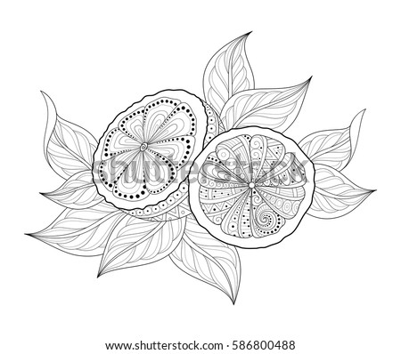 Vector Monochrome Contour Composition with Ornate Lemons and Leaves. Hand Drawn Decorative Slice of Citrus with Doodle Pattern. Botanical Illustration