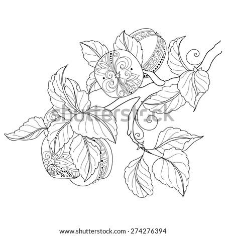 vector monochrome fruit