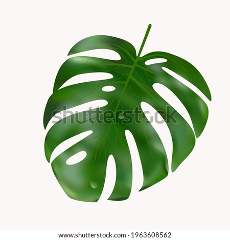 vector monstera leaf isolated
