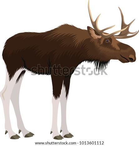 vector moose bull