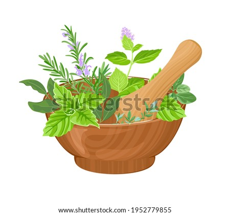 Vector mortar, pestle and fragrant fresh herbs isolated on white background. Cartoon flat illustration. Foto d'archivio ©