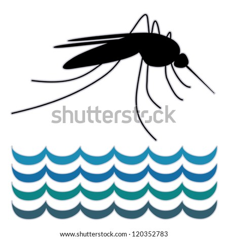 vector - Mosquito, standing water, graphic illustration, isolated on white. EPS8 compatible.