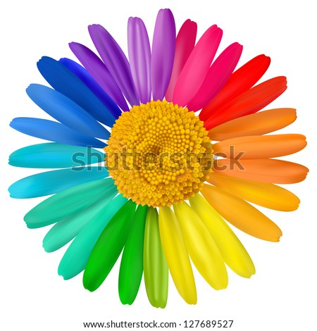 vector multicolored daisy