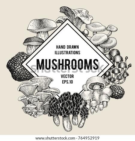vector mushroom illustrations