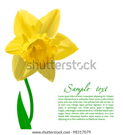 vector narcissus