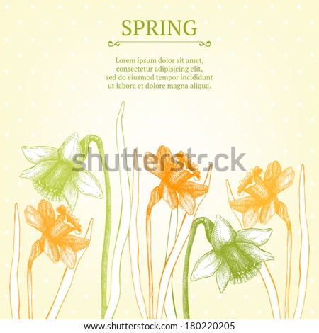 vector narcissus  card or