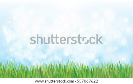 Vector  nature background, blue sky and green grass.