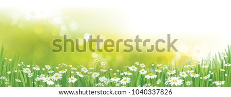 Stock Photo Vector nature  background, daisy  flowers field.