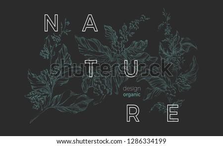 Vector nature template Botanical art sketch design Coffee tree with realistic leaf, flower, bean, grain Elegant green background Organic vintage card, retro bouquet Herbal hand drawn bio illustration