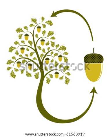 vector oak tree life cycle on white background