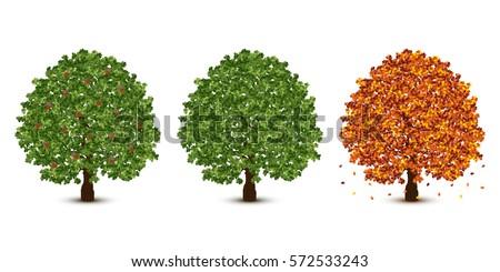 vector oak tree set on white