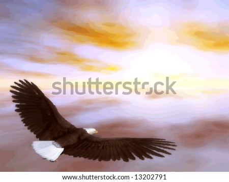 vector of a bald eagle flying