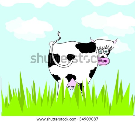 funny cows. a funny cow on the meadow