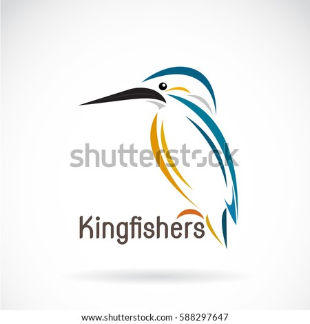 vector of a kingfishers  alcedo