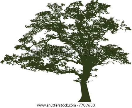 stock vector : Vector of an oak tree silhouette