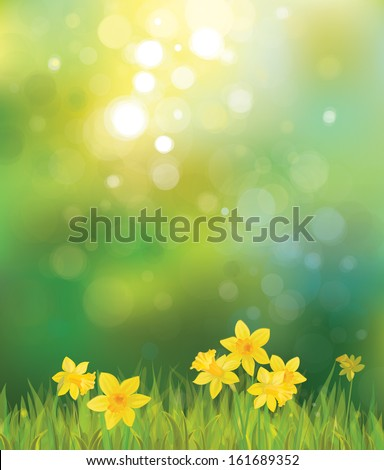 vector of daffodil flowers on