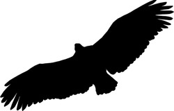Vector of Eagle in Flight Silhouette