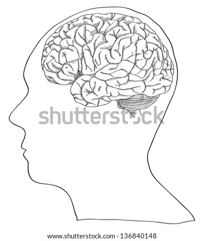 Vector of Human Brain Sketched Up, Vector Illustration EPS 10.