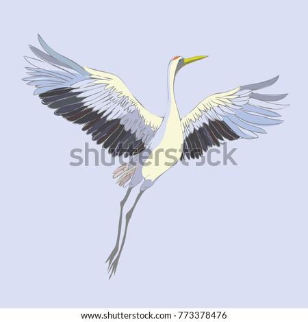 vector of illustrations bird