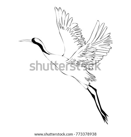 Vector of illustrations bird crane. White stork . isolated object