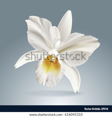 vector of orchid flower