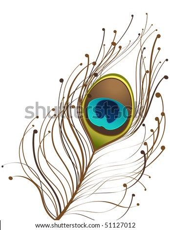 vector of single peacock feather