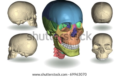 vector of skull of five different positions