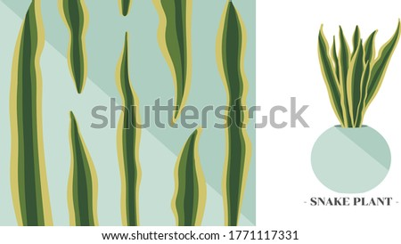 vector of snake plant and close