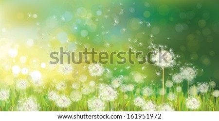 Stock Photo Vector of spring background with white dandelions.