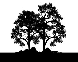 Vector of tree, Silhouette of tree, bush with bare branches. afar landscape and black space for text, isolated illustration