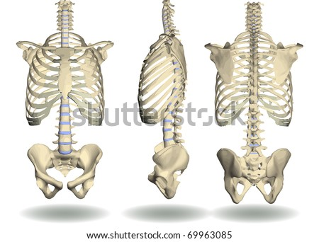 vector of trunk skeleton in three different positions
