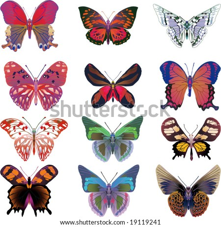 PATTERNS ON BUTTERFLY | Design Patterns