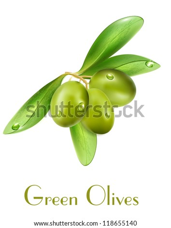 Vector olives isolated on a white background